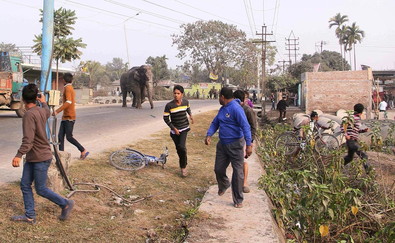 Rabid elephant 03