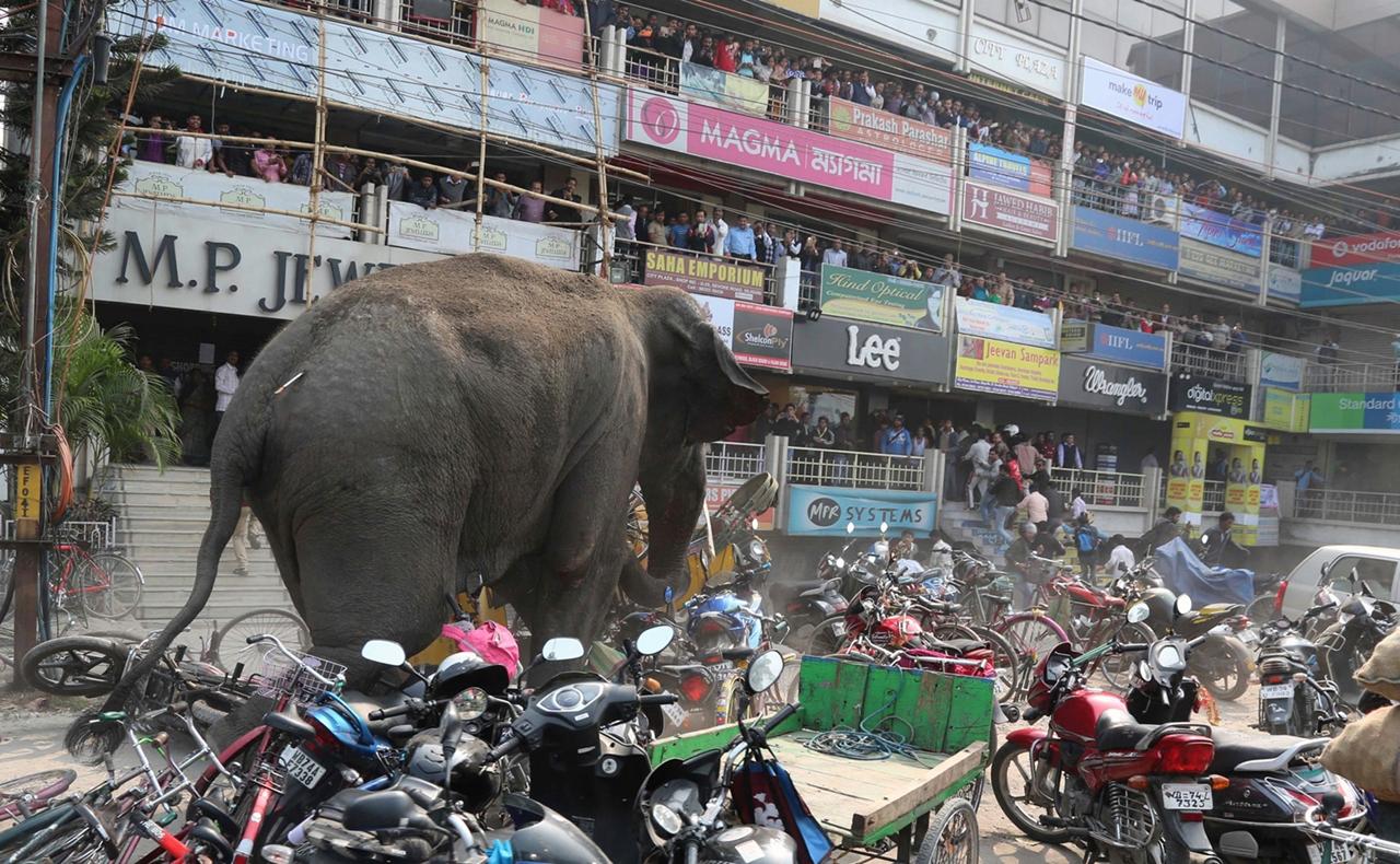 Rabid elephant 04