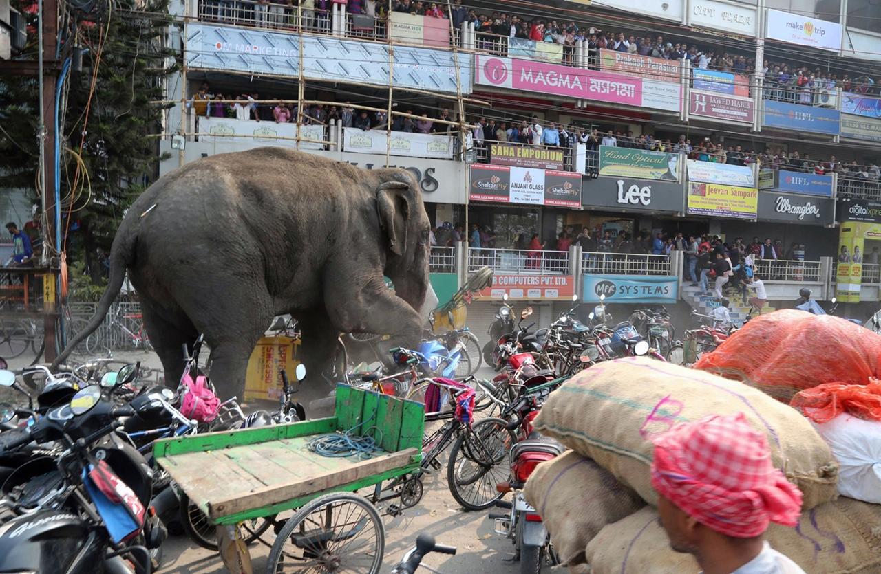 Rabid elephant 05