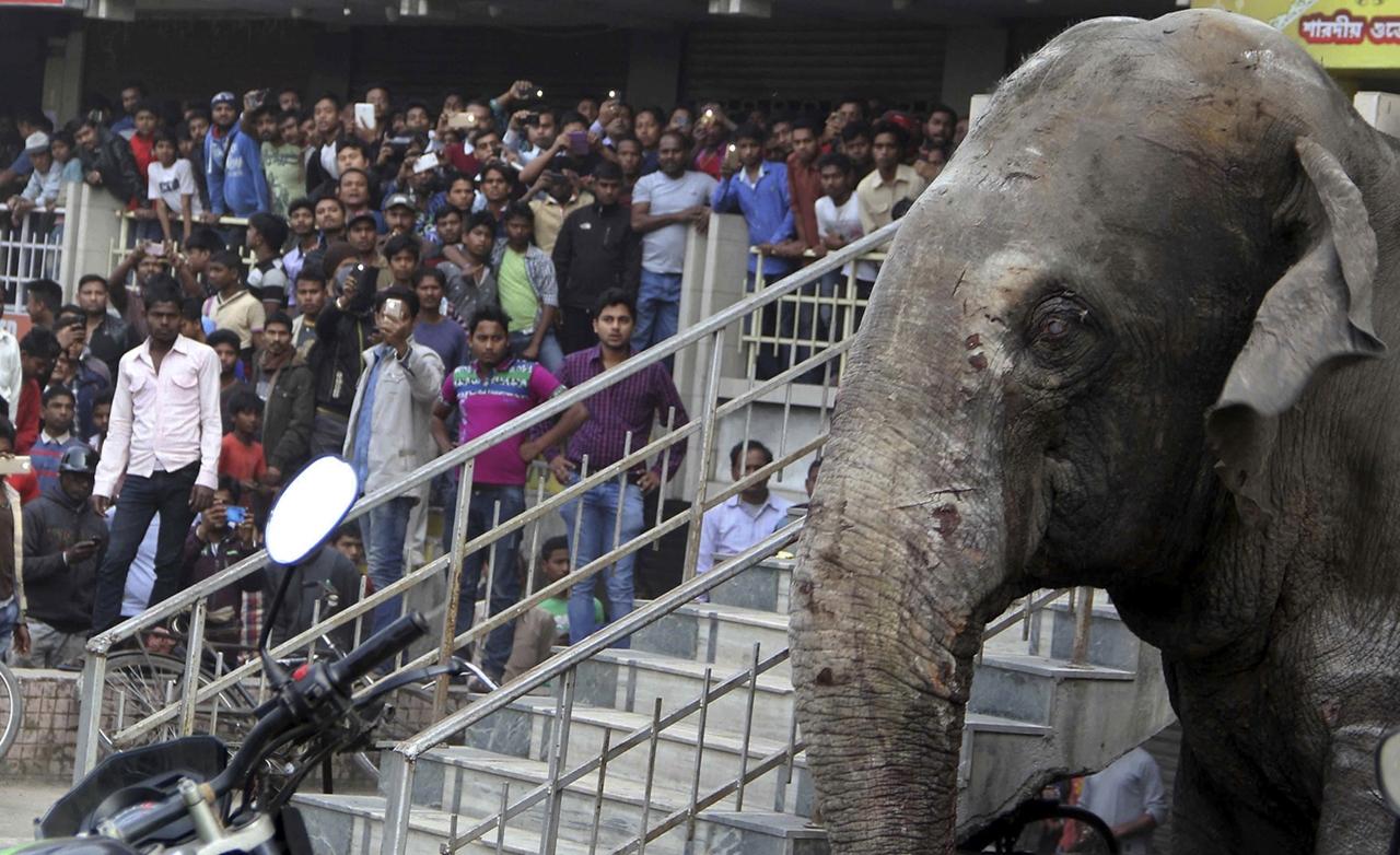 Rabid elephant 06
