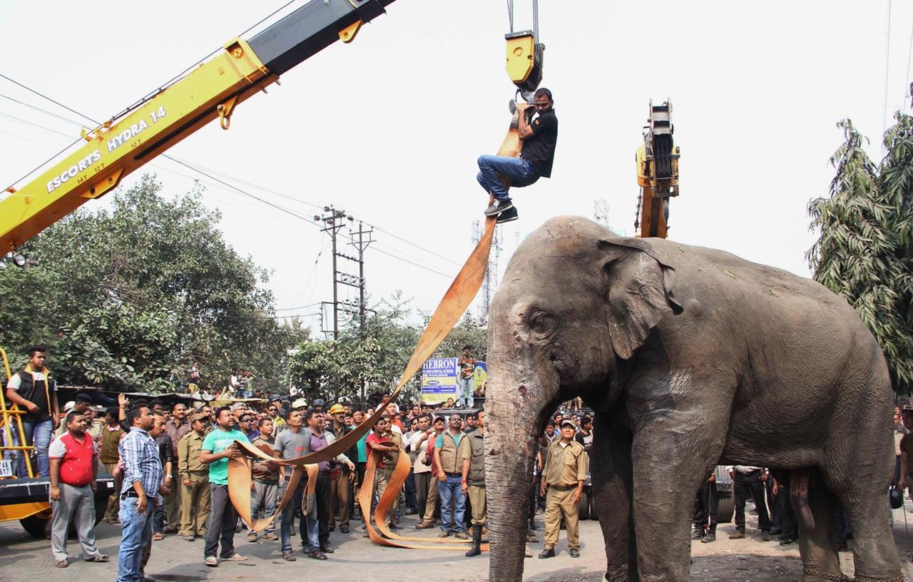 Rabid elephant 07