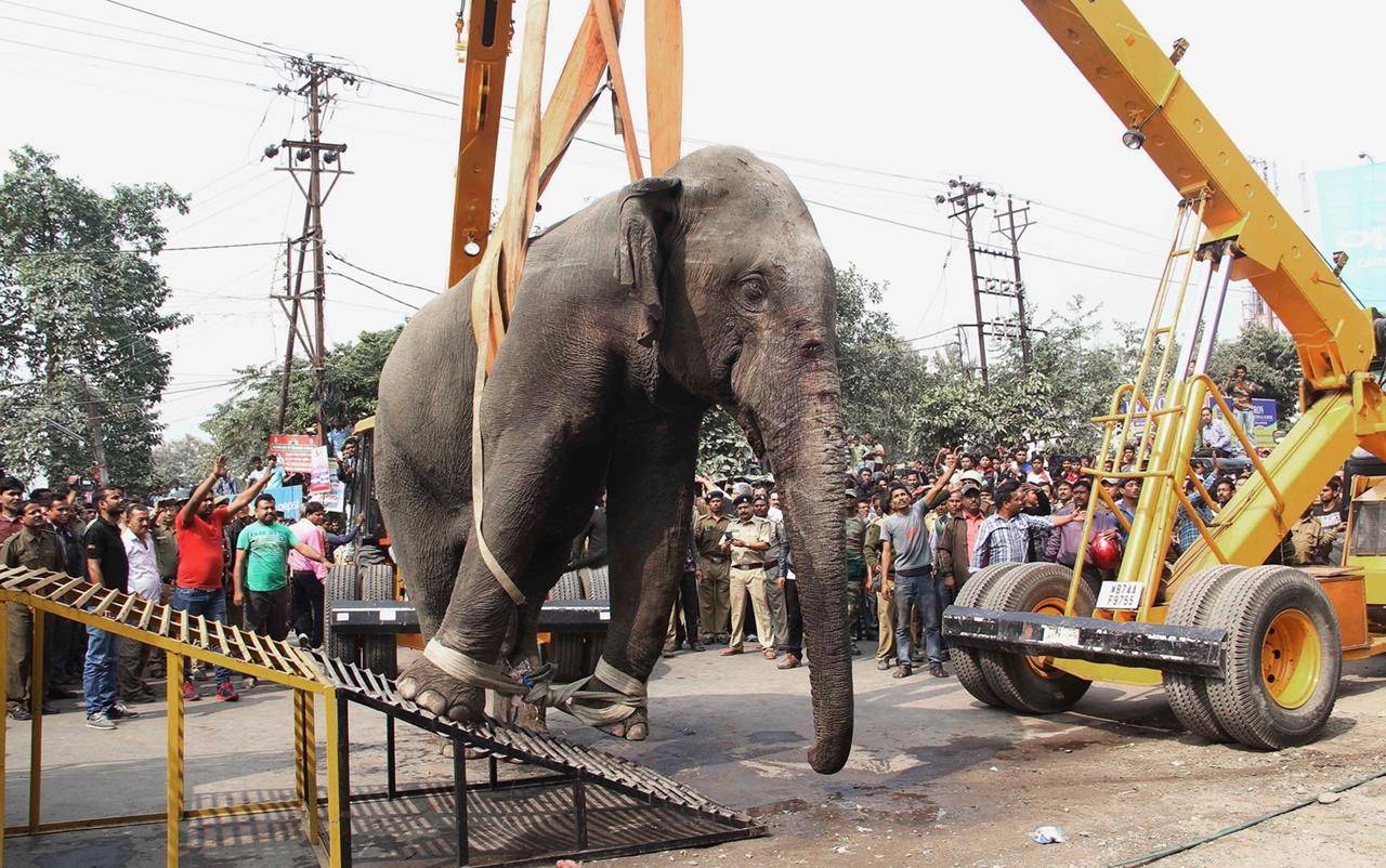 Rabid elephant 08