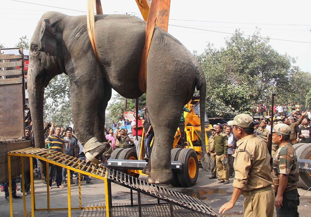 Rabid elephant 09