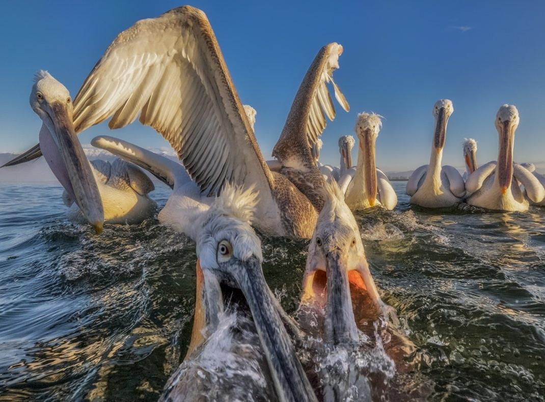 Smithsonian Magazine's 2015 Photo Contest 14