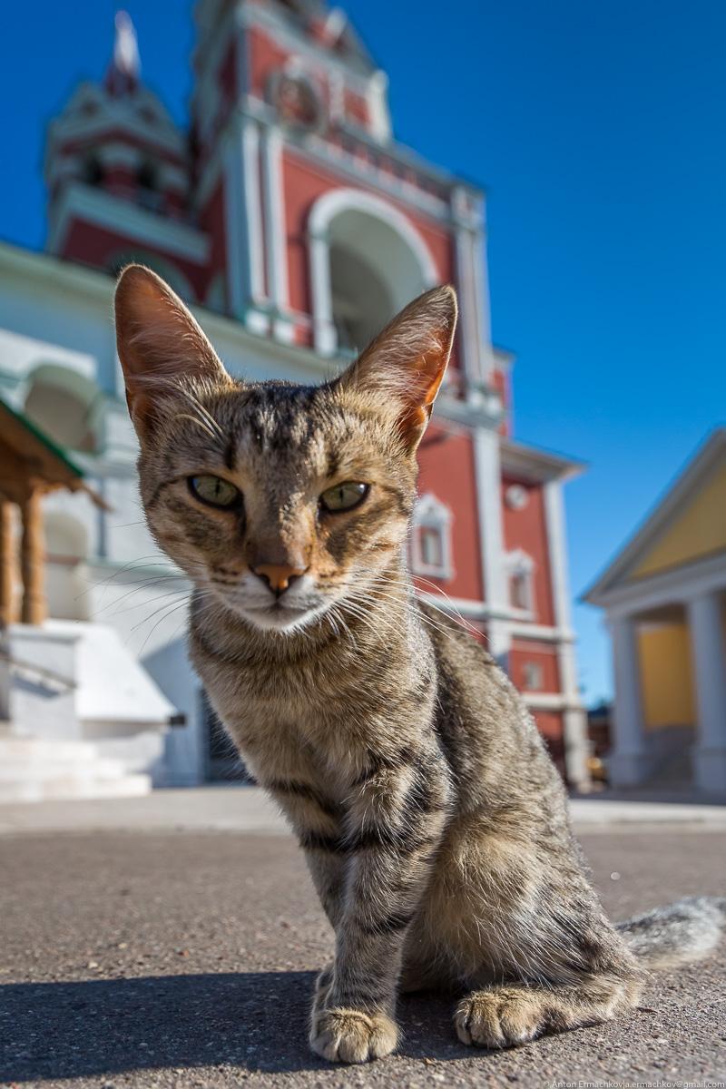 The Savvino-Storozhevsky monastery 07