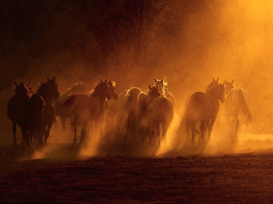 The beauty and grace of horses in the photos by Wojtek Kwiatkowski 02