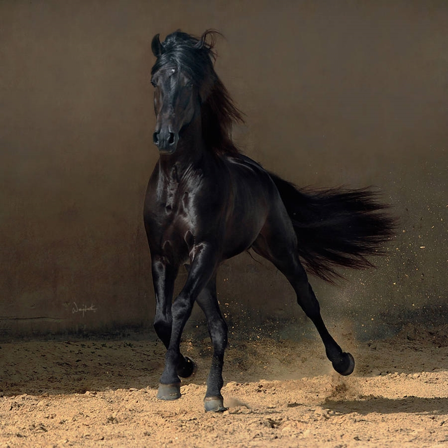 The beauty and grace of horses in the photos by Wojtek Kwiatkowski 03