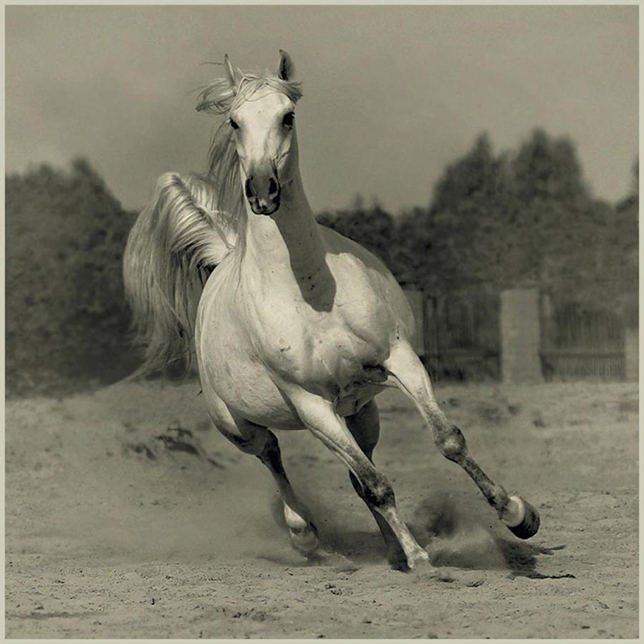 The beauty and grace of horses in the photos by Wojtek Kwiatkowski 05
