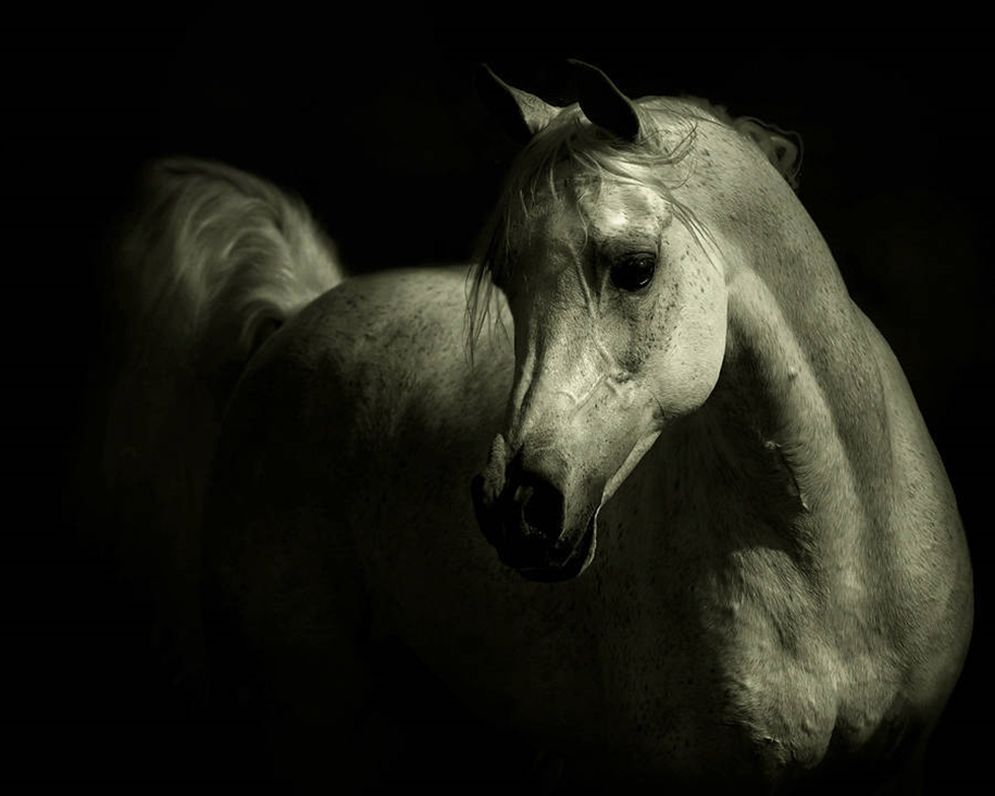The beauty and grace of horses in the photos by Wojtek Kwiatkowski 06