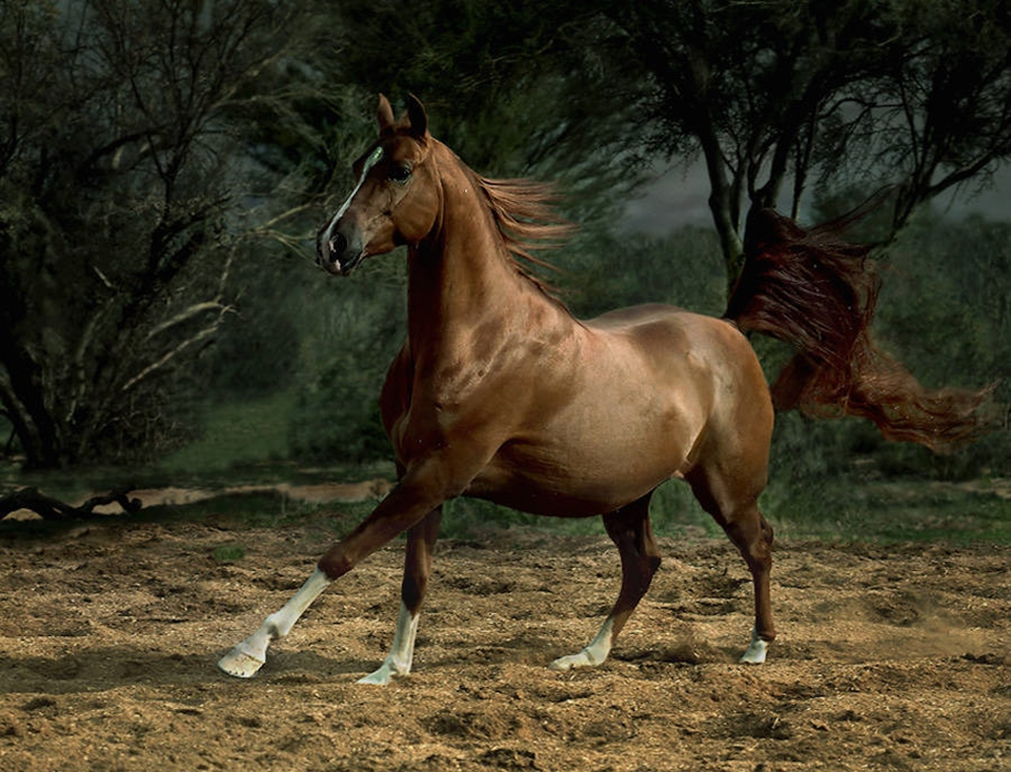 The beauty and grace of horses in the photos by Wojtek Kwiatkowski 07
