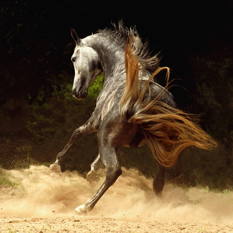 The beauty and grace of horses in the photos by Wojtek Kwiatkowski 08