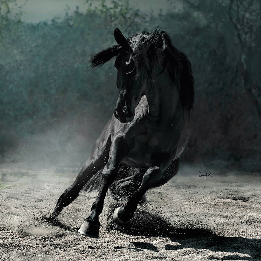 The beauty and grace of horses in the photos by Wojtek Kwiatkowski 10