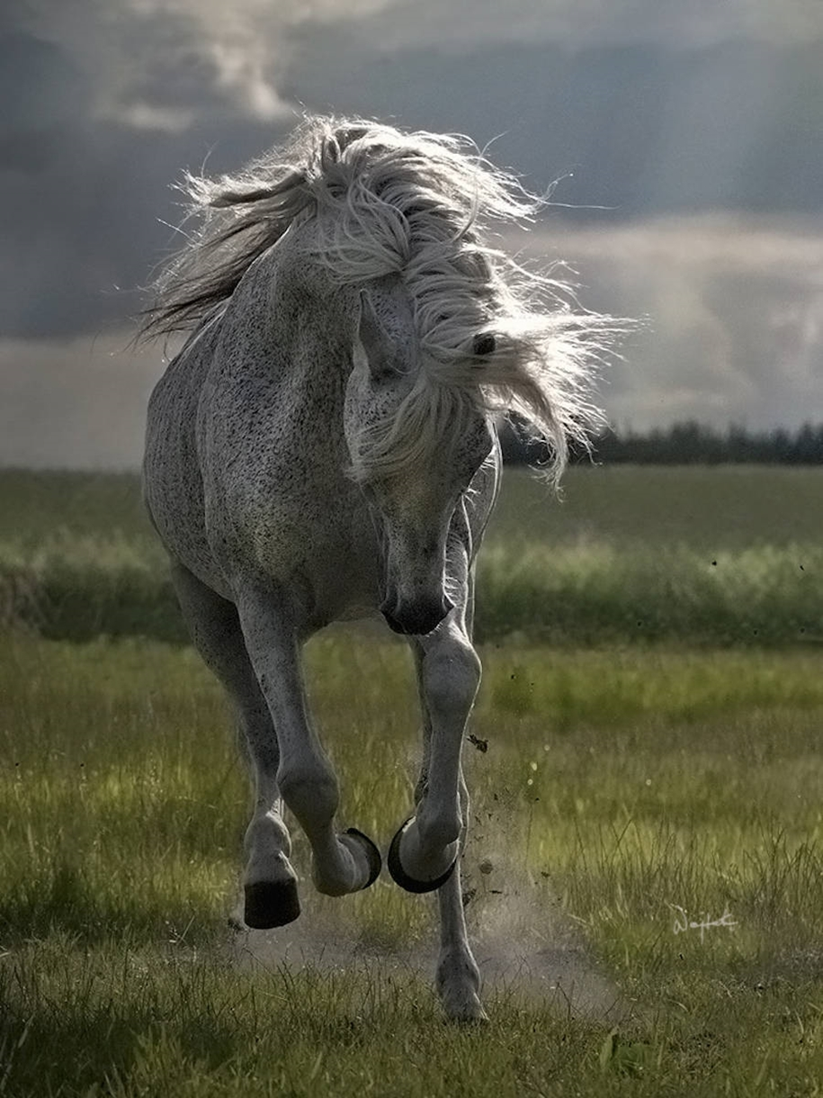 The beauty and grace of horses in the photos by Wojtek Kwiatkowski 11