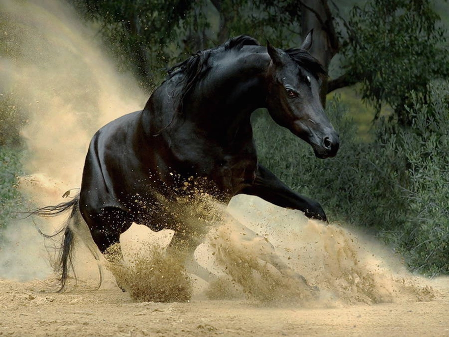 The beauty and grace of horses in the photos by Wojtek Kwiatkowski 13