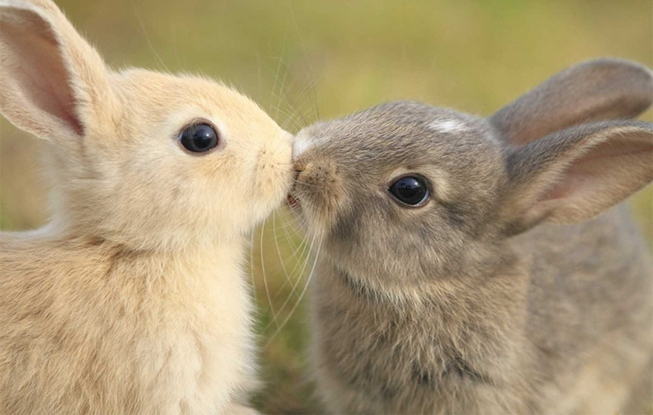 These kissing animals to prove that kissing is not just for people 01