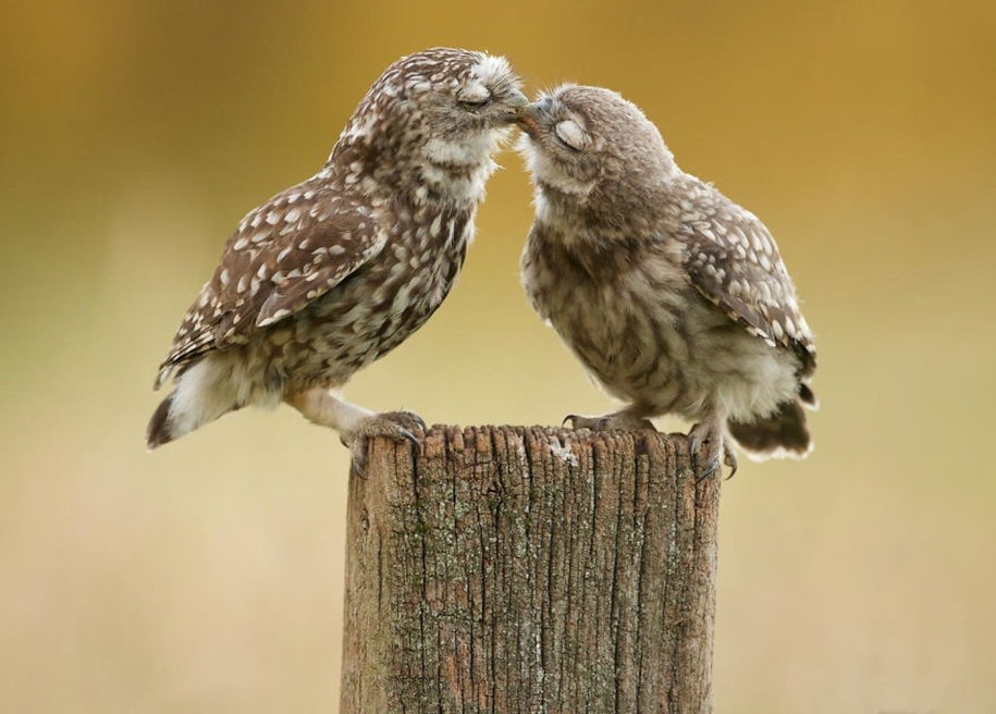 These kissing animals to prove that kissing is not just for people 08