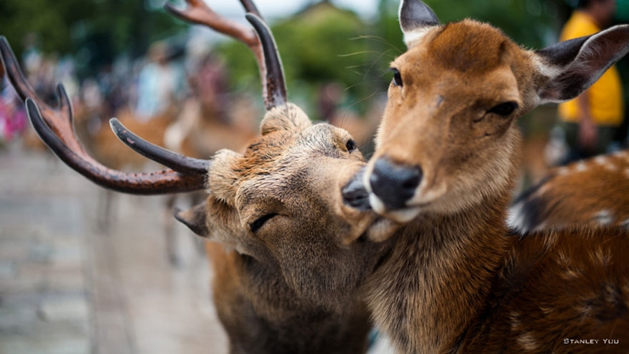 These kissing animals to prove that kissing is not just for people 12
