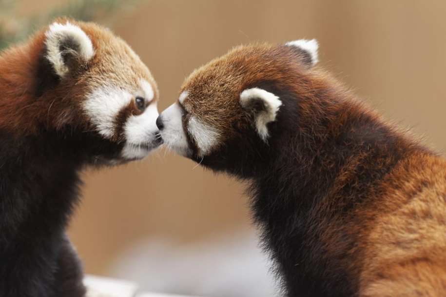 These kissing animals to prove that kissing is not just for people 17