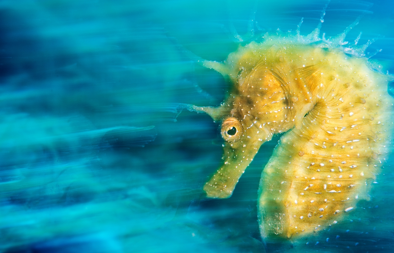 UK Underwater Photographer of the Year 2016 Winners 01