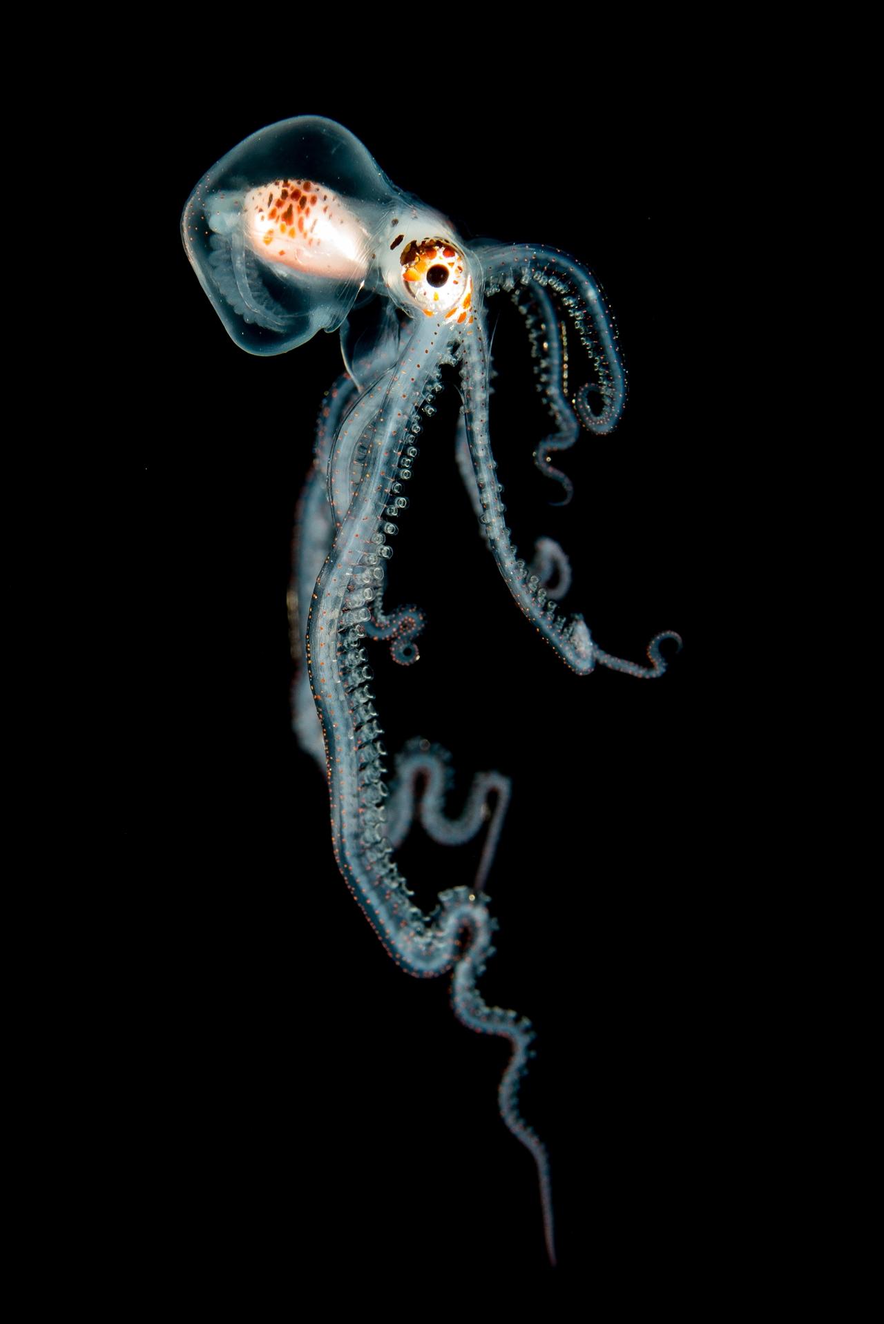 UK Underwater Photographer of the Year 2016 Winners 09