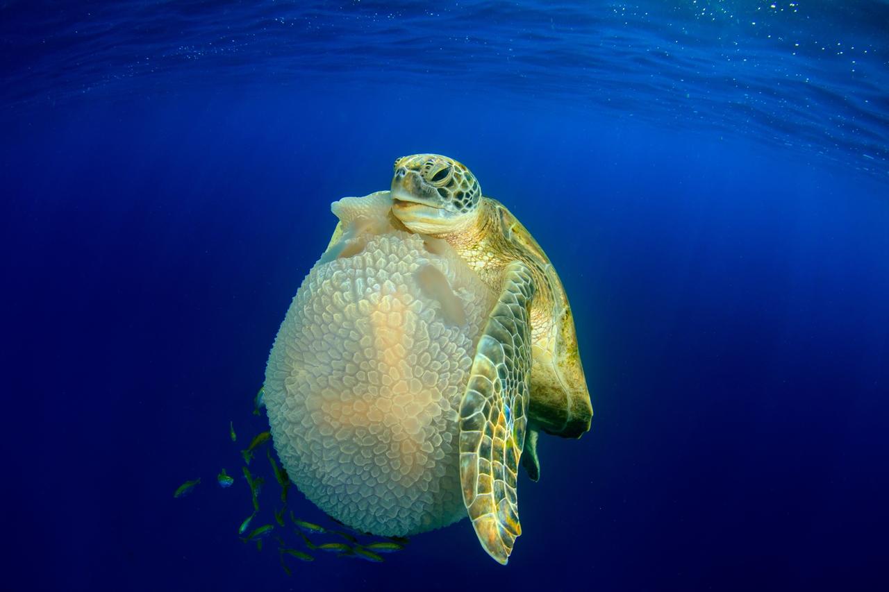 UK Underwater Photographer of the Year 2016 Winners 12