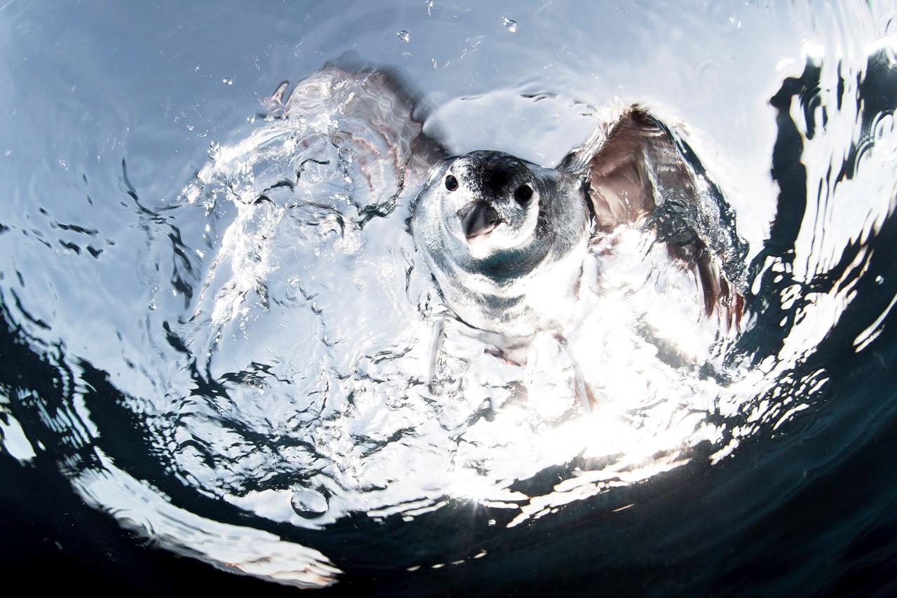 UK Underwater Photographer of the Year 2016 Winners 13