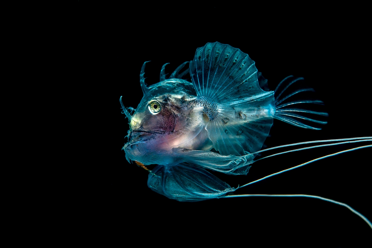 UK Underwater Photographer of the Year 2016 Winners 18