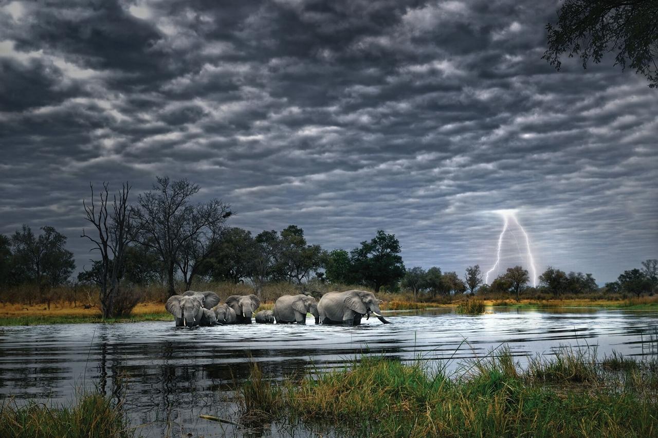 Wild Africa 02