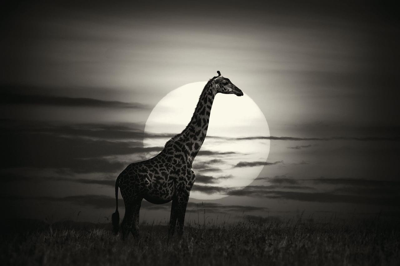 Wild Africa 03