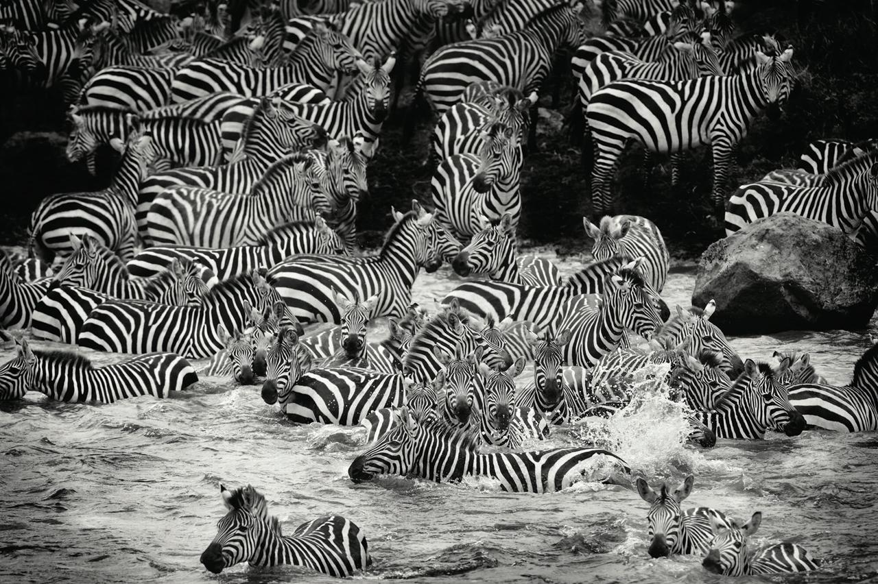 Wild Africa 08