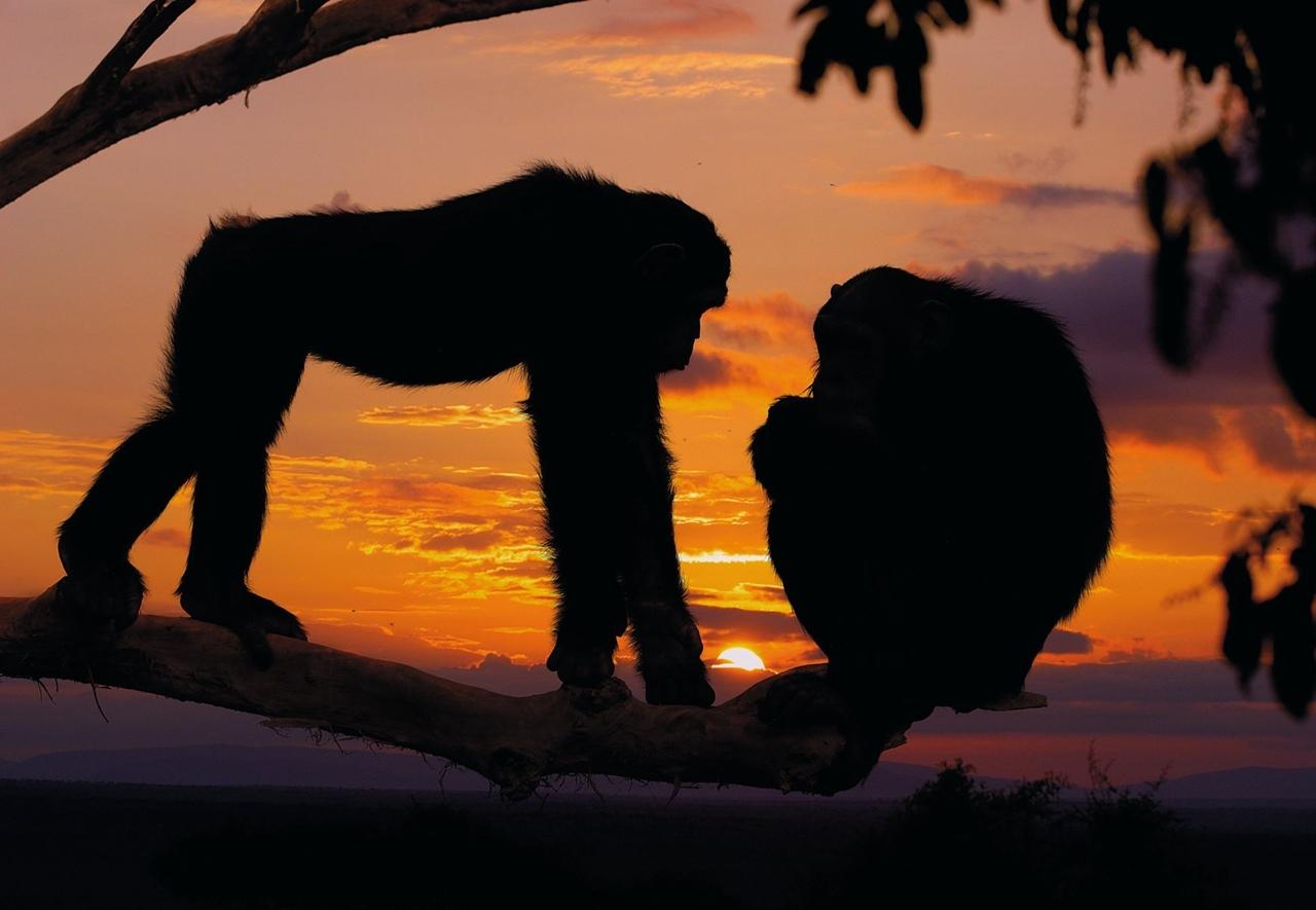 Wild Africa 11