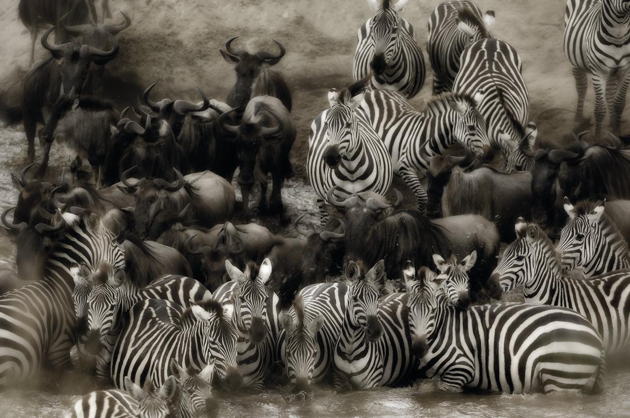 Wild Africa 12