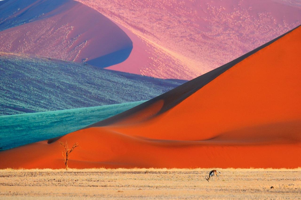 Wild Africa 13
