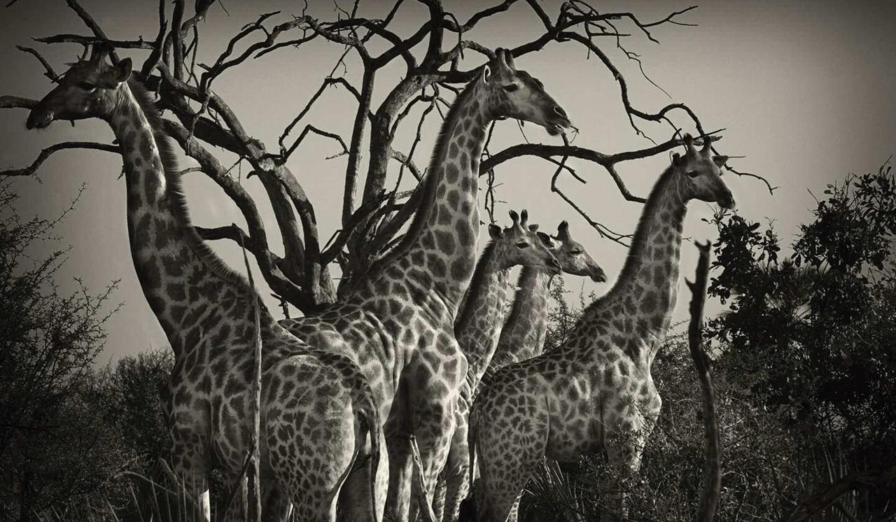 Wild Africa 15