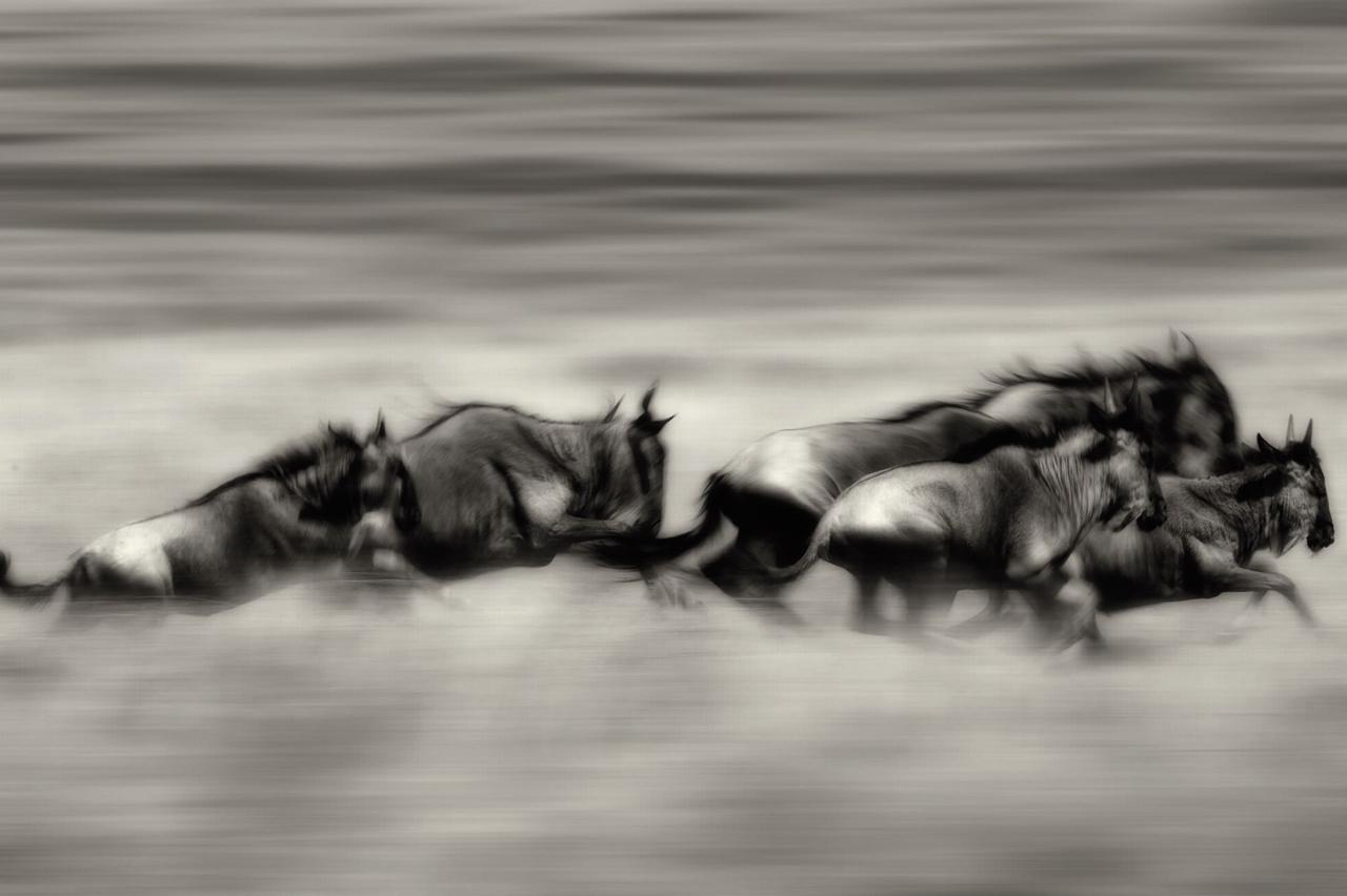 Wild Africa 16