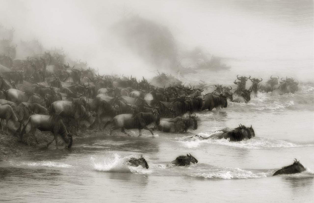 Wild Africa 18