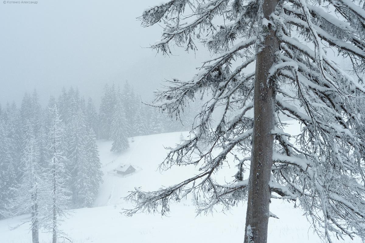 Winter in Gorgan 04