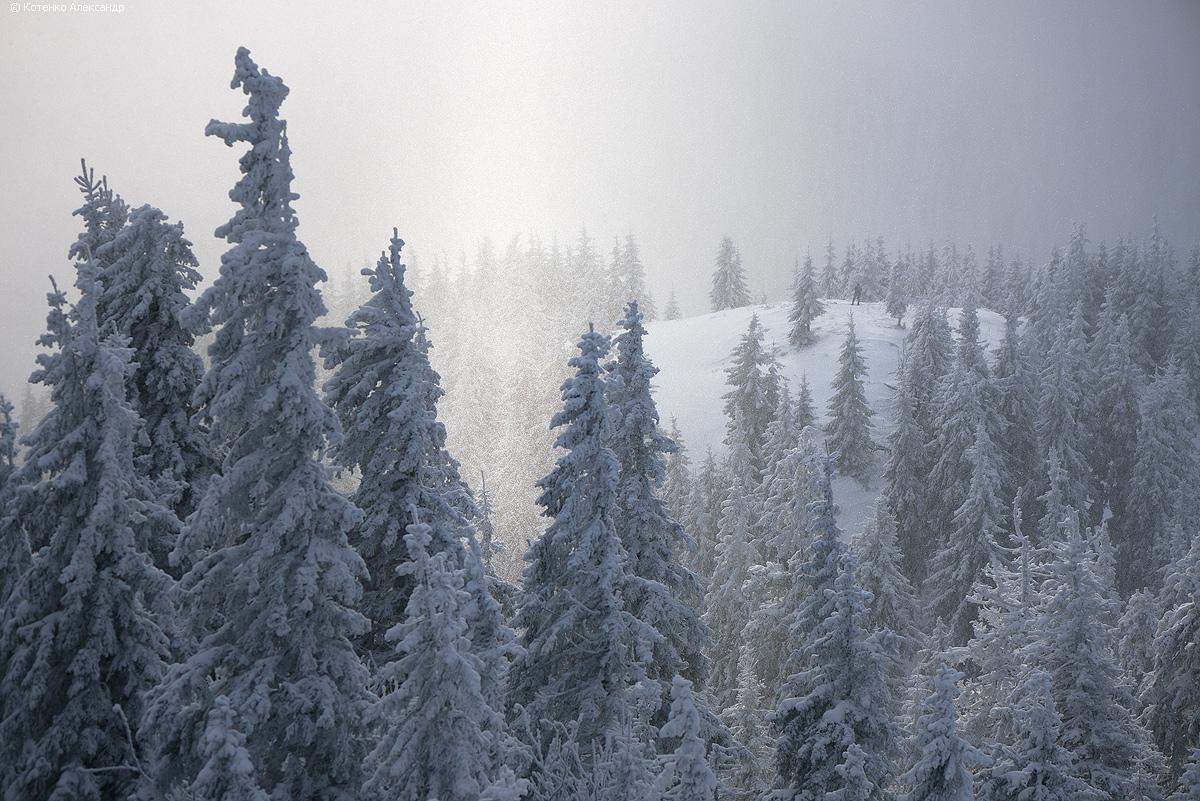 Winter in Gorgan 06
