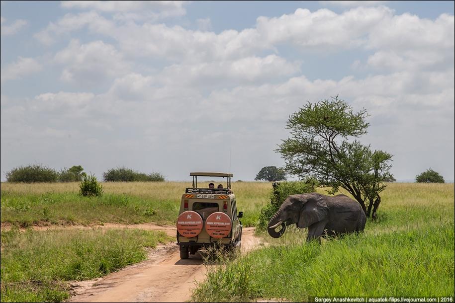 Царство слонов. Национальный парк Тарангире 03