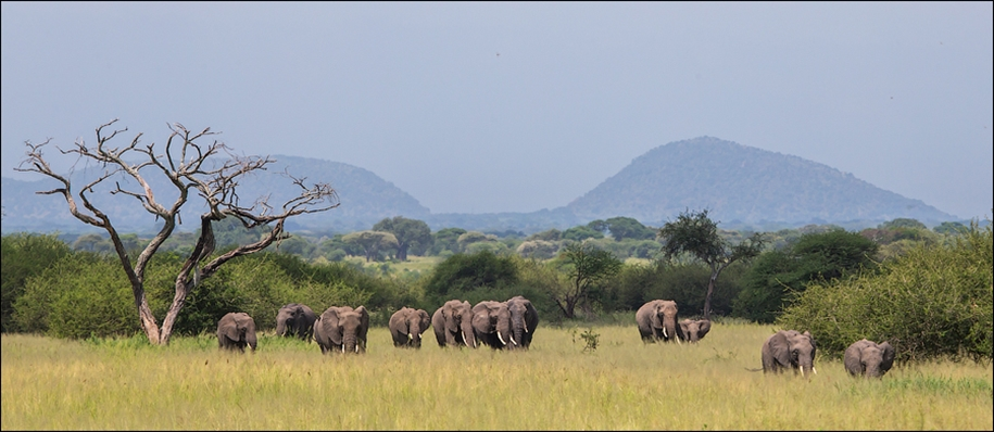 Царство слонов. Национальный парк Тарангире 13