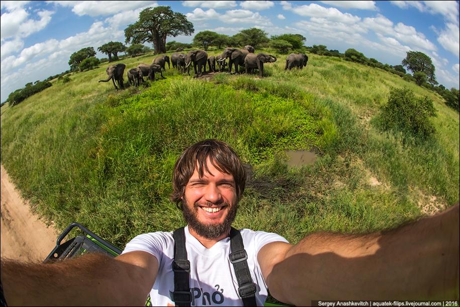 Царство слонов. Национальный парк Тарангире 27