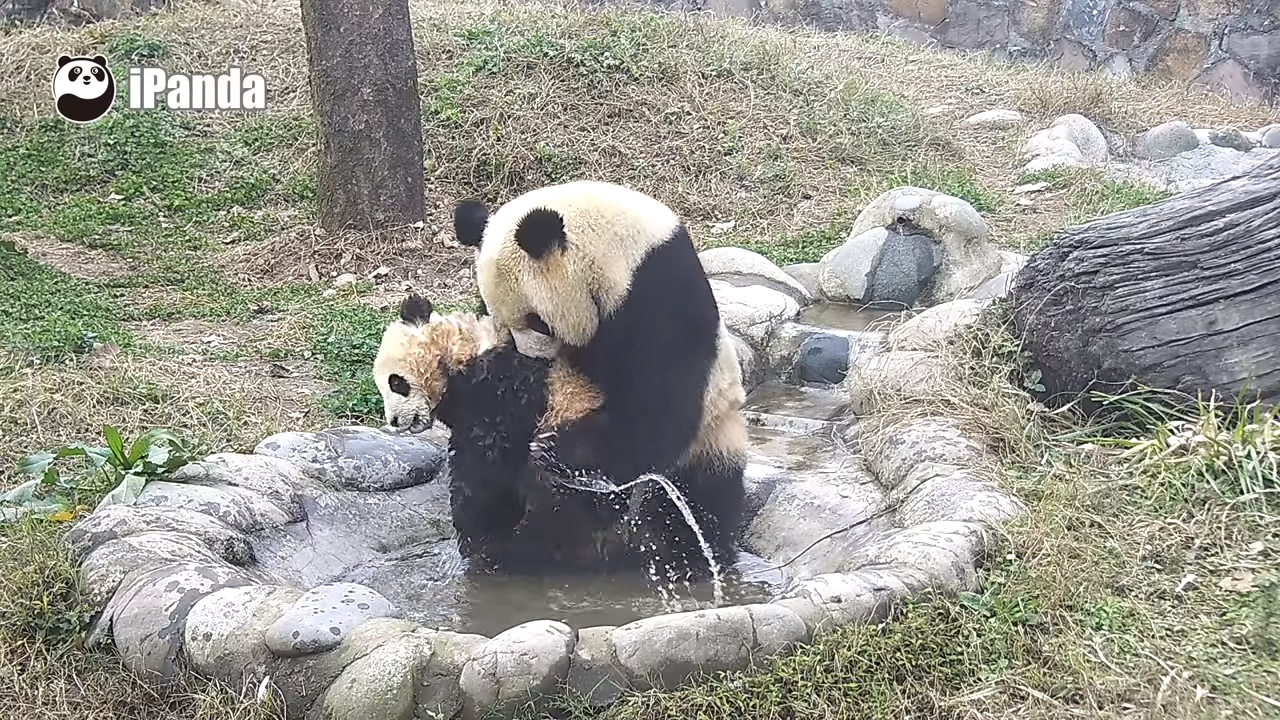 Adorable Panda Baby's bath