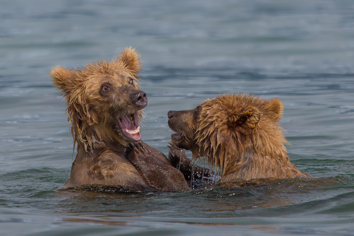 Bears of Kuril lake 10
