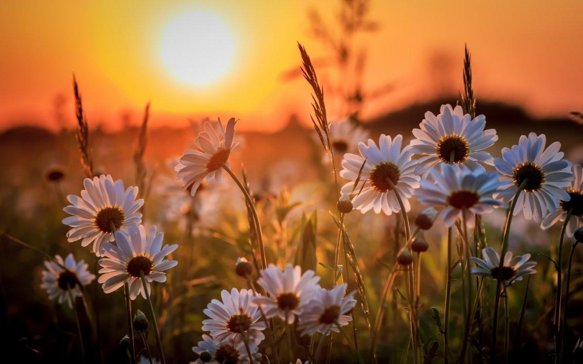 Красивые фотографий с закатами и рассветами