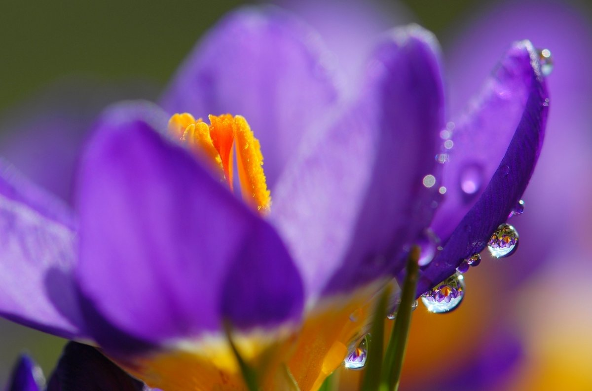 Beautiful pictures with dew drops 01