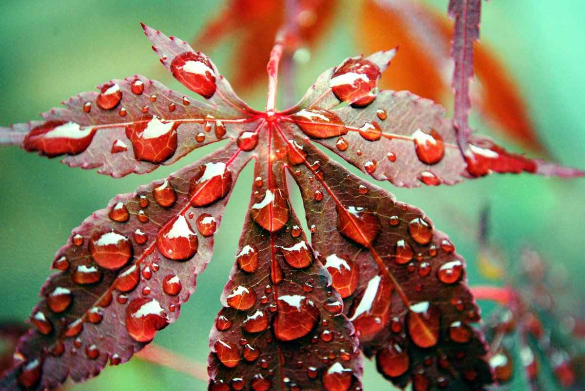Beautiful pictures with dew drops 06