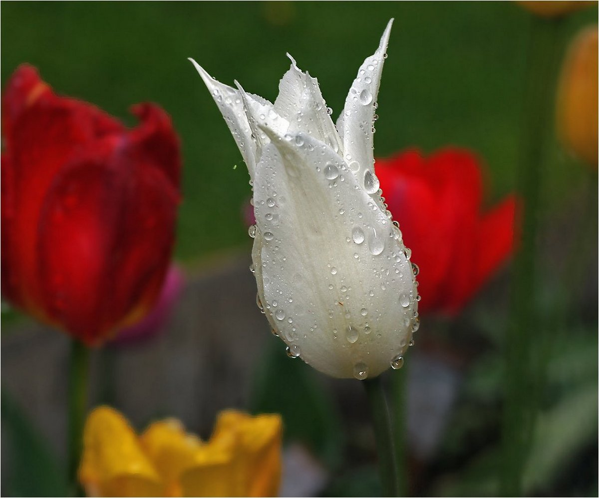 Beautiful pictures with dew drops 08