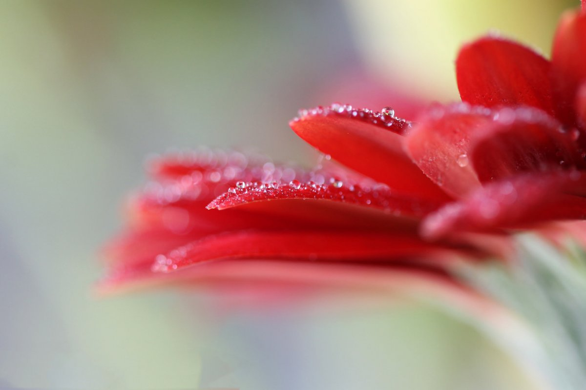 Beautiful pictures with dew drops 11