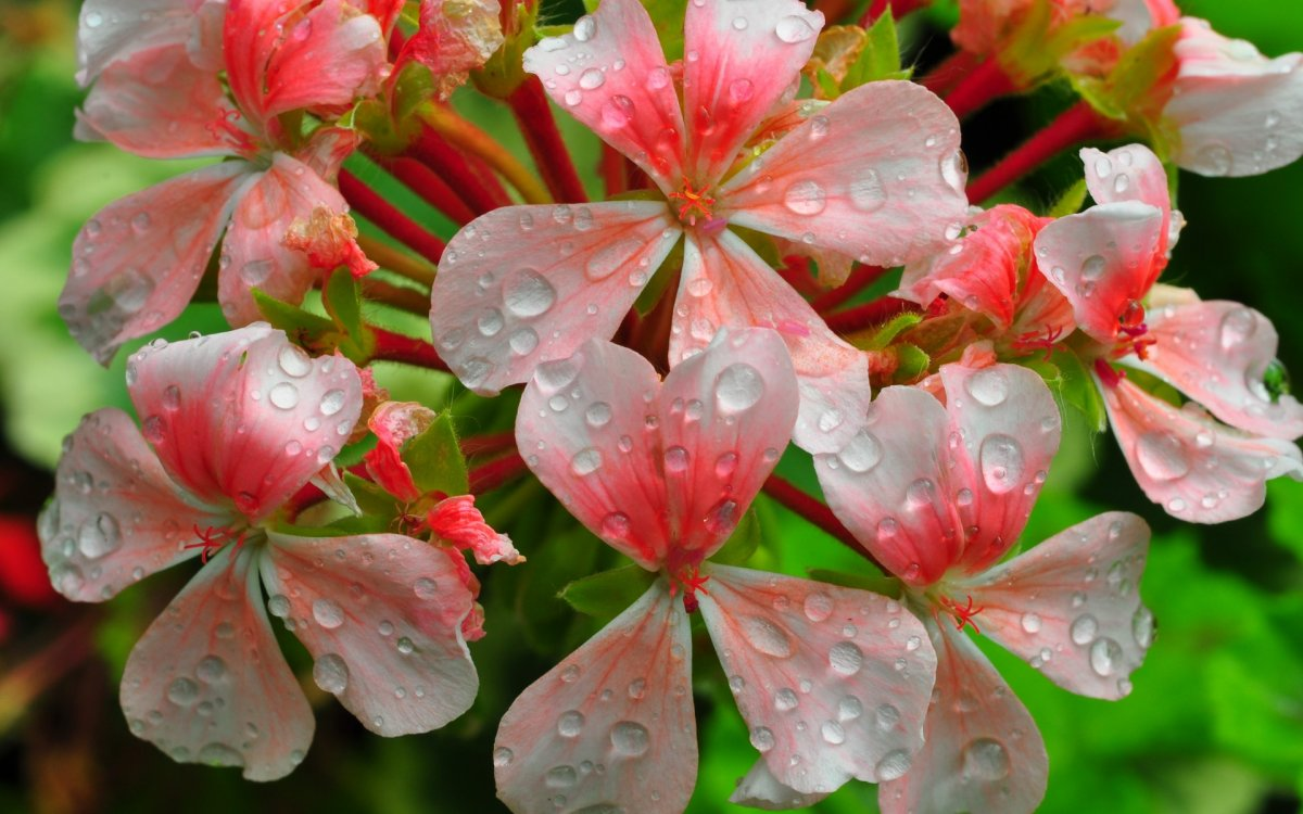 Beautiful pictures with dew drops 15