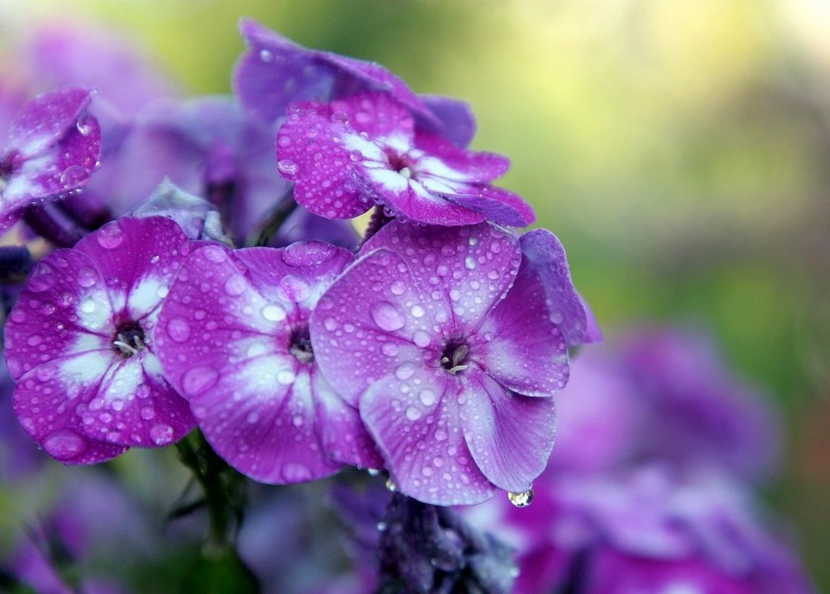 Beautiful pictures with dew drops 18